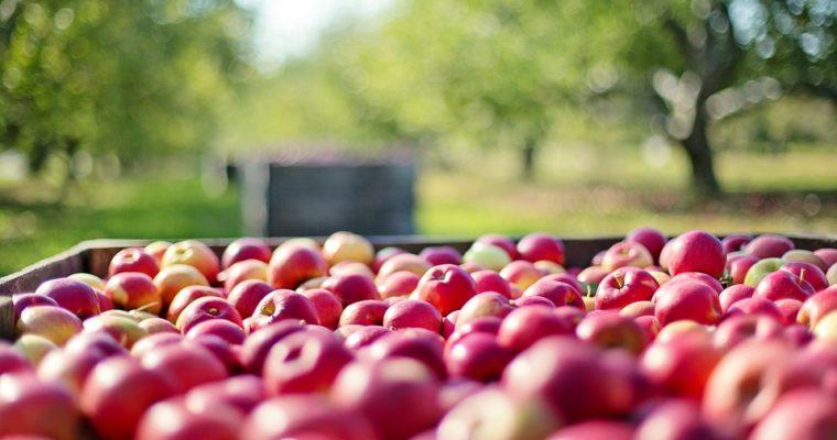 La monodiète d'automne – 8 erreurs à éviter