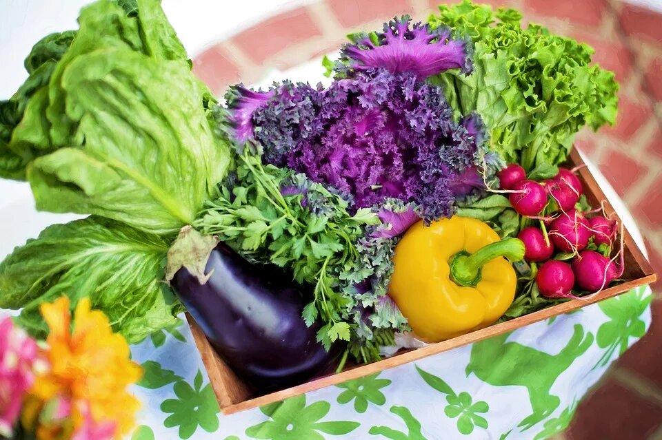Quand manger les fruits et les protéines ?